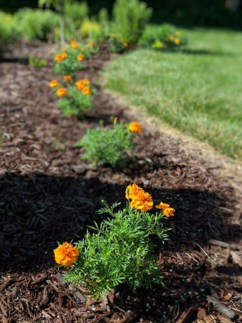 mulch - flower beds - home staging tips